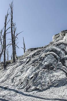Paul W Sharpe Aka Wizard of Wonders - Shadows of Dead Trees at Mammoth Hot Springs
