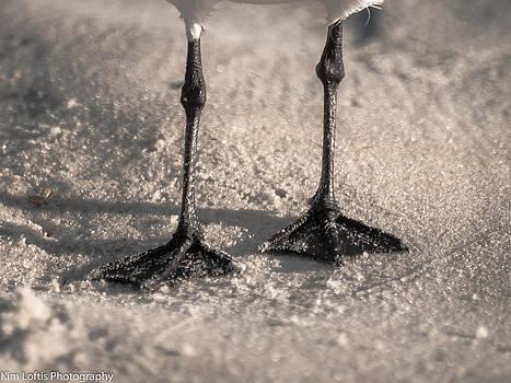 Shadows on the sand  by Kim Loftis