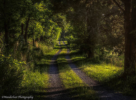 Shady Country Lane by Paul Herrmann