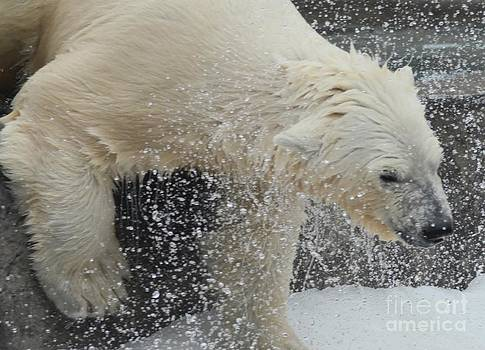 Shaking Off Water by Kathleen Struckle