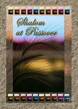 Jeanette K - Shalom at Passover Grass Sunset