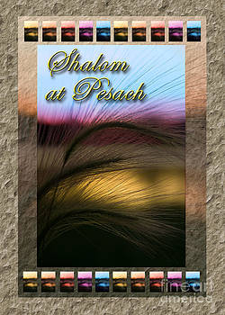 Jeanette K - Shalom at Pesach Grass Sunset