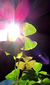 Shamrocks and Sunshine by Matt Brennan