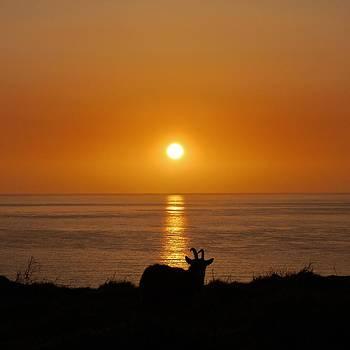 Sharing the Sunset by Rosie Schneider