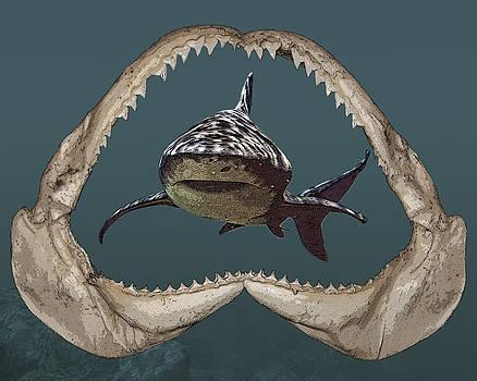 Shark by Angel Jesus De la Fuente