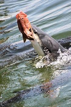 David Rich - Shark Attack