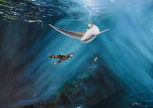 Shark Flight by Cathal Gallagher