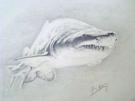 Shark by George  Bason