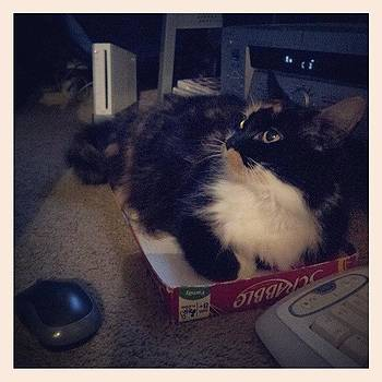 She Loves The #scrabble  Box #sillykitty by Mandy Shupp