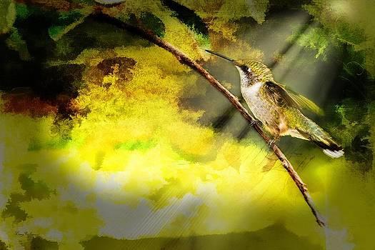 Hummingbird - Perched - She Waits by Barry Jones