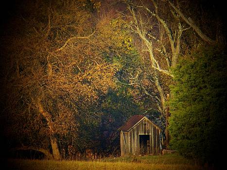 Shed and Trees by Joyce Kimble Smith
