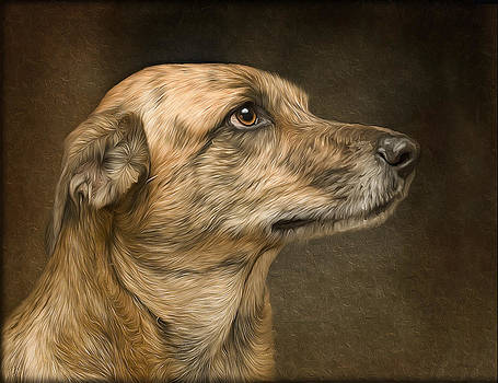 Sheeba by Hazel Billingsley