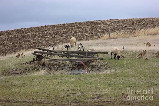 Sheep And Old Wagon by Linda Meyer