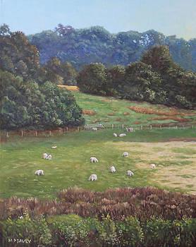 Martin Davey - Sheep in a field in the Devon countryside
