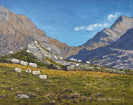 Sheep of Connemara Ireland by Diana Shephard