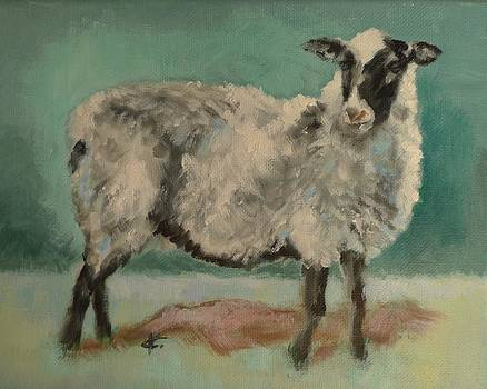 Sheep by Veronica Coulston