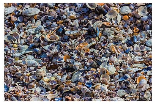 Shell Beach by Ed Hernandez