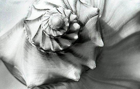 Shell by Dawn Dreibus