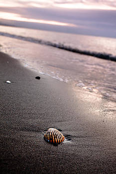 Shell on the beach by Mikhail Pankov