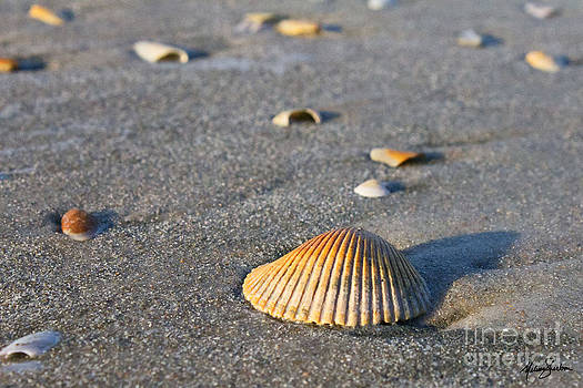 Shells 01 by Melissa Sherbon