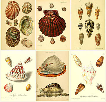 Shells and more shells  by Emis Miko
