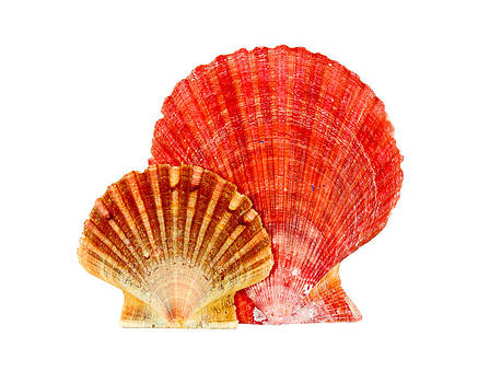 Shells by Borislav Marinic