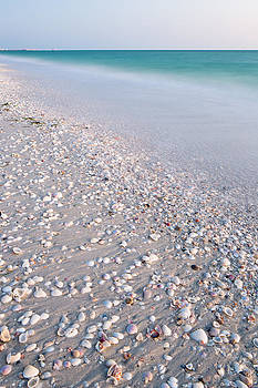 Shells In The Sand by Adam Pender