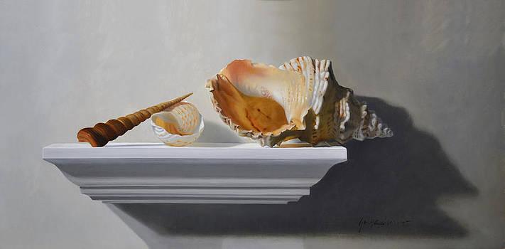 Shells on a shelf by Jorge  Alberto Gonzalez