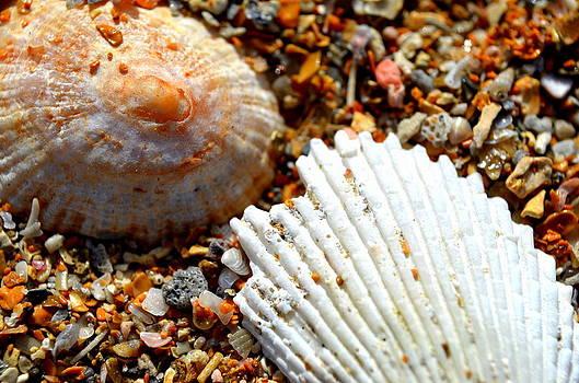 Shells On Sand by Riad Belhimer