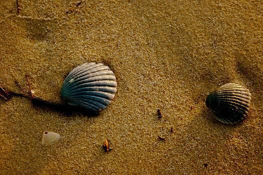 Shells on the Beach by Shane Dickeson