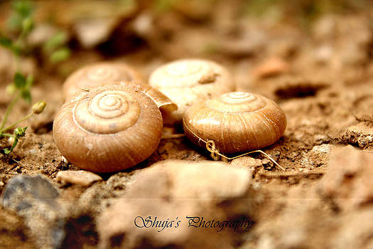 Shells by Shuja Rahman