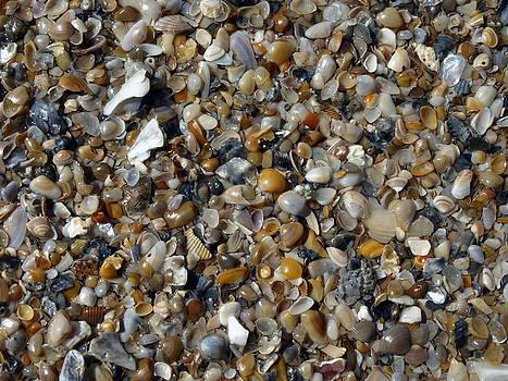 Shells by Valeria Donaldson