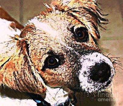 Sheltie Puppy by Judy Palkimas