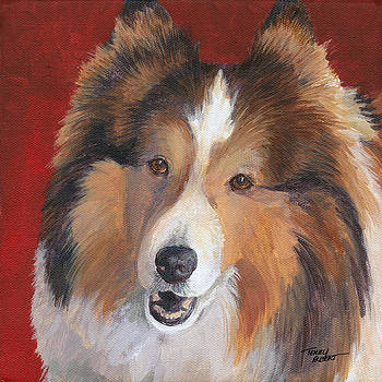 Sheltie by Terry Albert
