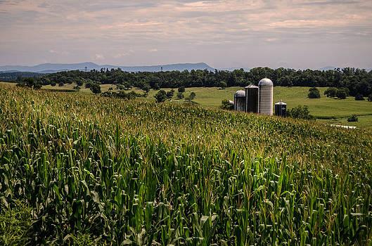 Shenandoah Corn by Pat Scanlon