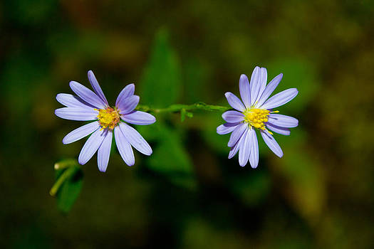 Mike Shaw - Sherando Lake Wildflowers