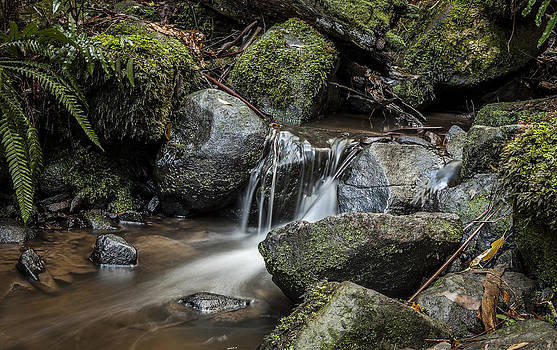 Sherbrooke Creek by Shari Mattox