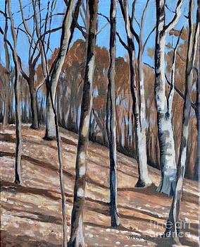 Sherwood in Fall by Joan McGivney