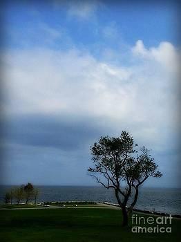 Sherwood Island by Kristine Nora