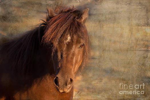 Michelle Wrighton - Shetland Pony at Sunset