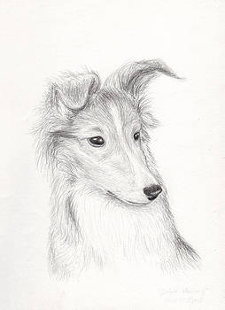 Jeanette K - Shetland Sheepdog Puppy