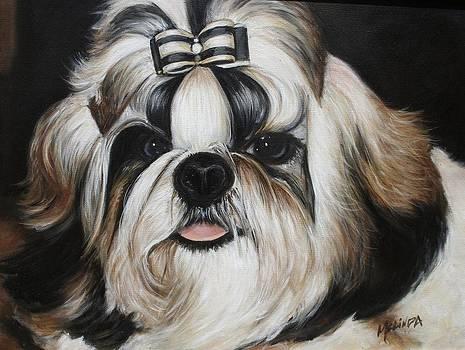 Shih Tzu Puppy  by Melinda Saminski
