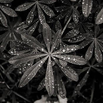 Shimmer by John Magnet Bell