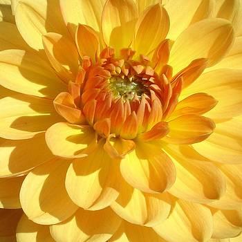 Ramabhadran Thirupattur - Shine Bright