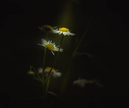 Shine On by Paul Barson