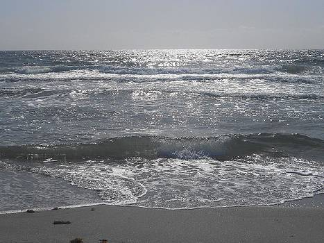 Shining Sea by Sheila Silverstein