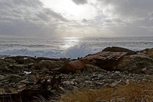 Shipwrecked by Ann Allain - Corvidae Studio Photos