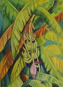 Shirleys Bananas by Tricia Mcdonald