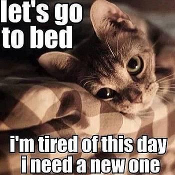 Shleepy And Sick 😴😷🐱 #meow by Smellslikeairwick Tirrell
