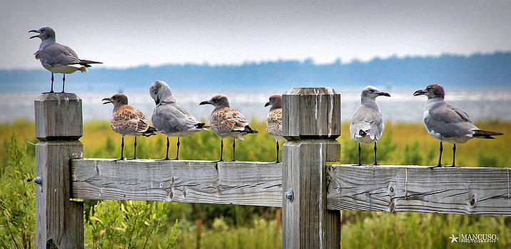 Shooting The Breeze by Phil Mancuso